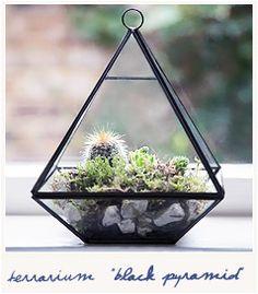 * Black pyramid terrarium