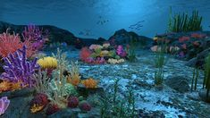 Ocean floor coral reefs Model available on Turbo Squid, the world's leading provider of digital models for visualization, films, television, and games. Forest Creatures, Ocean Creatures, Easy Canvas Painting, Shoe Painting, Underwater Painting, Sea Floor, Water Animals, Ocean Themes, 3d Max