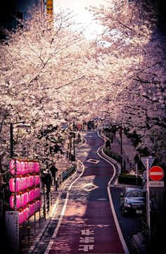 Ai Nihon 愛日本: Hanami in Tokyo +++For guide + advice on #lifestyle, visit http://www.thatdiary.com/
