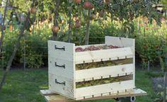 In manchen Jahren tragen die Apfelbäume so reich, dass man nicht alle Früchte sofort essen oder verarbeiten kann. In unseren stapelbaren Obstkisten Marke Eigenbau, den sogenannten Apfelstiegen, lassen sich Äpfel gut und platzsparend lagern.