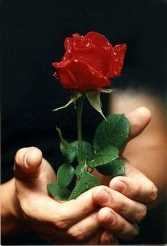 Rose for love gif. Very beautiful,Thanx My Flower, Pretty Flowers, Flower Power, Single Red Rose, Beautiful Red Roses, Rose Images, Floral, Garden, Plants