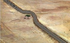 Save Tree. Human must think this way. Trees are our life. #Amazing Images