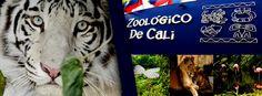 Zoológico de Cali  Ubicado al occidente de la ciudad atravesado por el Río Cali, el único en Colombia con acuario.