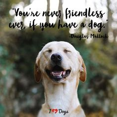 """You're never friendless ever, if you have a dog."" - Douglas Malloch Dog Meme Dog Inspirational Dog Quotes Quotes About Dogs Dog Quotes Love, Dog Quotes Funny, Dog Memes, Funny Dogs, Quotes Quotes, Quotes About Dogs, Life Quotes, Dog Photos, Dog Pictures"