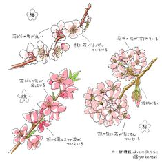 Illustration Blume, Botanical Illustration, Flower Drawing Tutorials, Cherry Blossom Japan, Drawing Sketches, Drawings, Digital Painting Tutorials, Plant Drawing, Watercolor Flowers