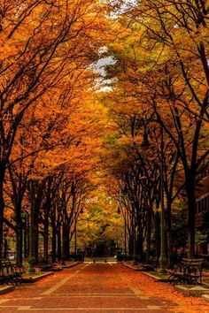 Fall in Boston by Inder Wadhwa #AutumnLeaves