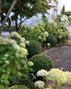 Hydrangea Landscaping, Front Yard Landscaping, Landscaping Ideas, Ideas Para El Patio Frontal, Back Gardens, Outdoor Gardens, White Gardens, Garden Planning, Amazing Gardens
