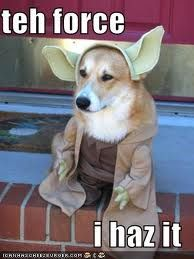 "Almost as good as ""pooped in your shoes I have""! I need this costume for my puppy!"