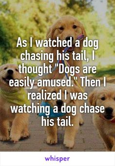 "As I watched a dog chasing his tail, I thought ""Dogs are easily amused."" Then I realized I was watching a dog chase his tail."
