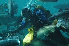 Aquarium of Aalesund