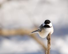 Brian Keating: How small birds survive the cold, cold winter Interesting Animals, Small Birds, Cold, Winter, Winter Time, Little Birds, Winter Fashion