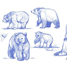 I don't do this enough.. Gotta shake off this rust cus I can hear the squeaking hinges in my brains...#bear #studies #grizzly #brownbear #sketch
