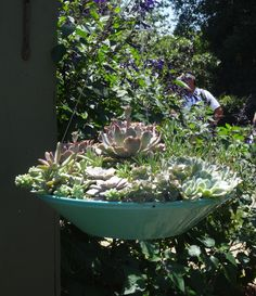 succulents in a hanging planter tended.wordpress.com