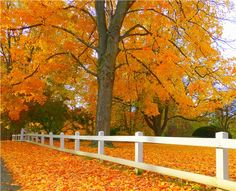 Nothing more beautiful than Fall