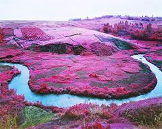 Stunning Pink Landscapes Of The Deadly African Congo