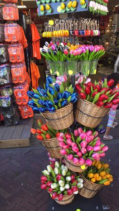 Holland tulips!!!!
