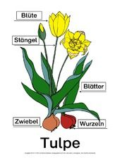 pdf – Famous Last Words Garden Care, Preschool Garden, Tulips Garden, Evil Spirits, Holiday Cocktails, Science, Software Development, Flower Art, Pansies