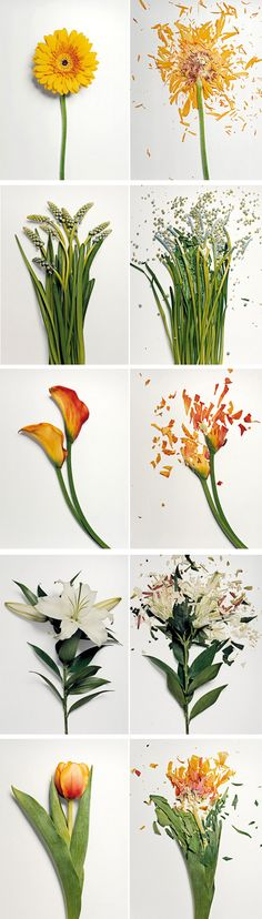 Jon Shireman 2010 - Broken Flowers