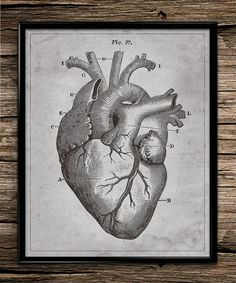 Heart Anatomy | Vintage Wall Art | Vintage Anatomy | Human Anatomy | Home Decor | Office Decor | Printable | 8x10 | Instant Download |