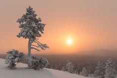 Polar night is over