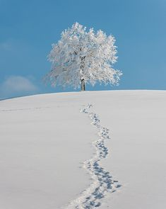 winter...love our bright blue skies...cold enough to freeze your nostrils shut but, pretty...