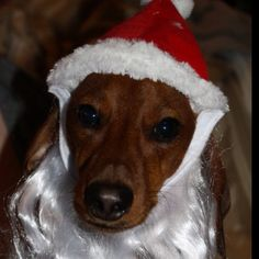 Weiner Dog Santa! :) Reminds Me of Winston!