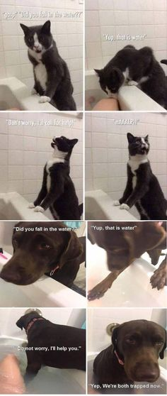 lol lucy's randomness gatos, humor de animal, a Funny Animal Jokes, Stupid Funny Memes, Cute Funny Animals, Funny Relatable Memes, Funny Animal Pictures, Cute Baby Animals, Funny Cute, Funny Shit, Funny Dogs