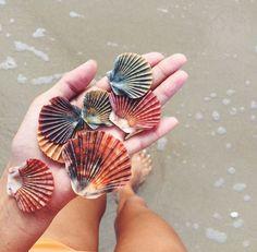 Blushedcreation seashells, starfish, summer feeling, summer of love,
