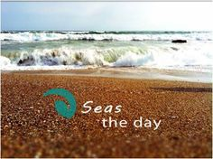 beach,ocean, dolphins,starfish photos,signs and quotes