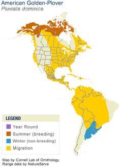 American Golden-Plover Range Map
