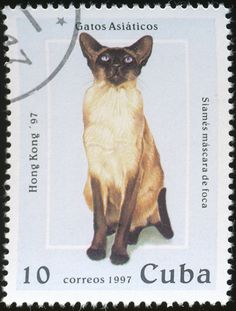 Cuba 1997 Cat Stamps - Siamese