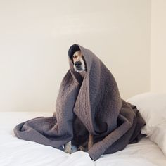The Blanket Monster, generally nocturnal but if you're patient it does emerge every 24 hours