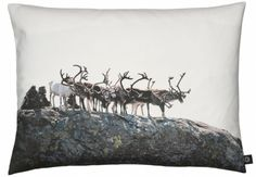 by nord Small Reindeer Pillow Scandinavian Furniture, Scandinavian Living, Scandinavian Design, Christmas Cushions, Big Animals, Nordic Home, Modern Pillows, Printed Cushions, Getting Cozy