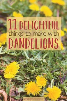 Dandelions are an amazing plant- every piece is useful and good for you! Learn 11 fun things you can make using the dandelions you find in your backyard. Dandelion Jelly, Dandelion Leaves, Dandelion Flower, Dandelions, Natural Home Remedies, Herbal Remedies, Dandelion Recipes, Edible Wild Plants, Natural Lifestyle