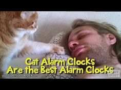 A compilation of cats alarm clock trying to wake their master gently still asleep in bed. Very effective, the cat clocks you lick your hair and give you smal...