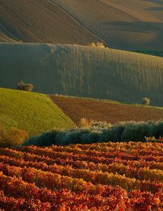 Vineyard and Hills covered in Val Vibrate, Teramo, Italia