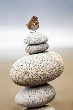 Balance~ the key to life. ♥