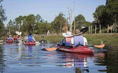 Kayaking | Brevard Zoo