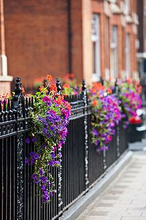 On a fence. Hang basket on other side of fence, put the flower over the front of the fence. Great idea.
