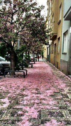 Premyslovská street in spring. Flowers are simply everywhere...