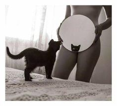 mirrorz