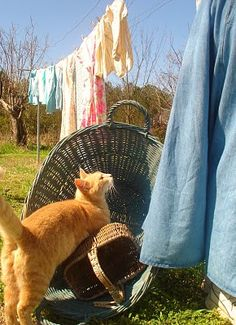 Sweet Country Life ~ Simple Pleasures ~ laundry on the line gets me every time Country Charm, Country Life, Country Girls, Country Living, I Love Cats, Crazy Cats, Chat Beige, Farm Animals, Cute Animals