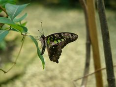 """""""The caterpillar does all the work, but the butterfly gets all the publicity."""" #butterfly #wildlifewednesday #insects #leaf #colourful #nature #heartAfrica"""