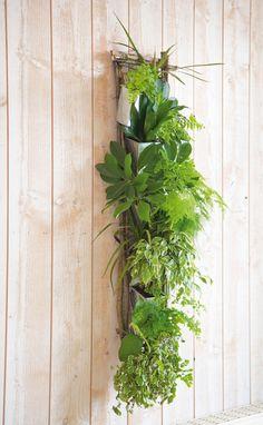 I ➨➨ Visite Deco vous propose aujourd'hui la création d'un cadre végétal à moindre frais ! Découvrez nos astuces pour réaliser le votre.