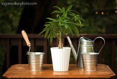 Unity Tree Planting Ceremony | Logan Walker Photography