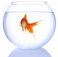 goldfish bowl - Google Search