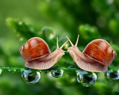 Awesome Beautiful Snail Wallpaper HD is posted by wallpaperciv, we are giving you best collection pictures for Awesome Beautiful Snail Wallpaper HD. Wallpaperciv.com is free blog that giving you best collection for wallpaper pictures. Free Huge Selection of Wallpapers for High Resolution that available to free download here. Wallpaperciv.com is considered to be as really comprehensive covering really wide variety for you to choose!