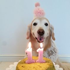 To a beautiful lady at eleven! facebook.com/sodoggonefunny
