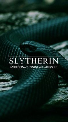 harry potter, slytherin, and hogwarts image – Harry Potter Draco Harry Potter, Images Harry Potter, Estilo Harry Potter, Harry James Potter, Harry Potter Facts, Harry Potter Universal, Slytherin Pride, Slytherin House, Hogwarts Houses