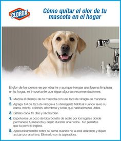 Elimina el olor a perro de tu casa